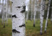 В Таганском районе потеряли рощу деревьев: готовится жалоба в прокуратуру