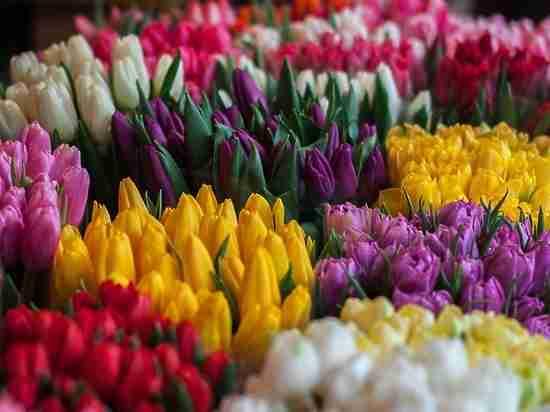 В Оренбургском районе мужчина остался без 1000 тюльпанов