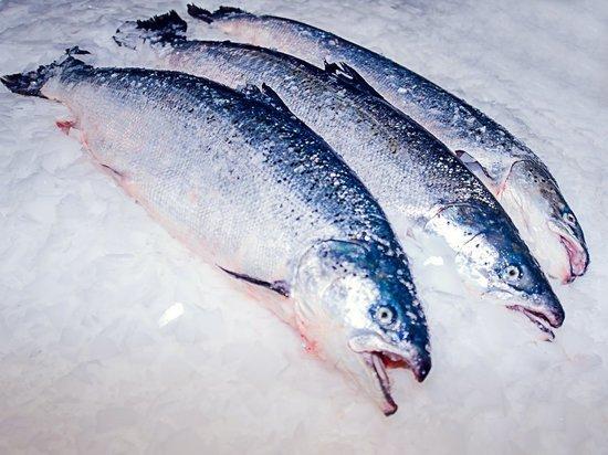 В Первомайском районе уничтожена красная рыба